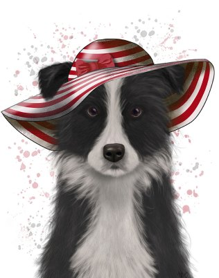 Border Collie in Red and White Floppy Hat