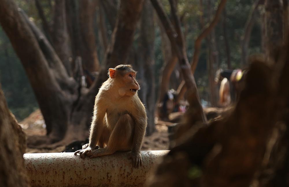 Veermata Jijabai Bhosale Zoo | Mumbai