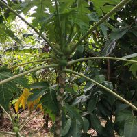bean-to-bar-gallery-tree-22