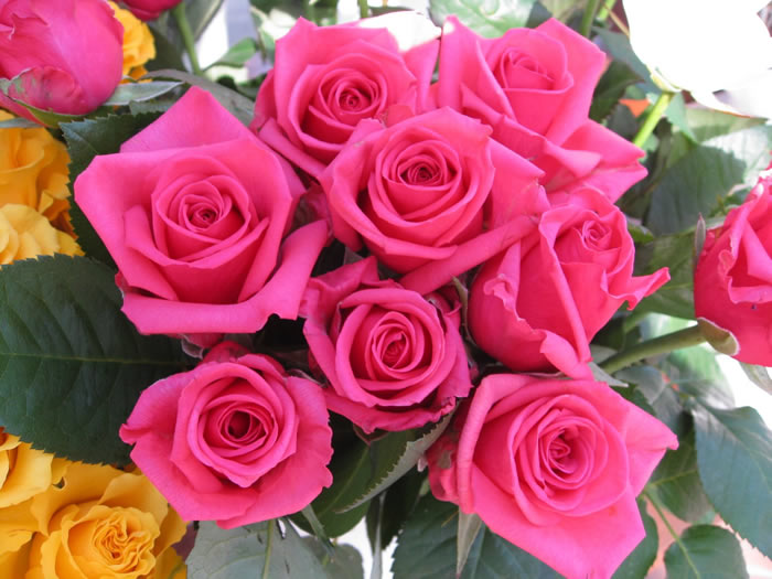 """""""https://i1.wp.com/www.fabiovisentin.com/photography/photo/12/roses-wallpaper-roses-bouquets4315_high.jpg"""" grafik dosyası hatalı olduğu için gösterilemiyor."""
