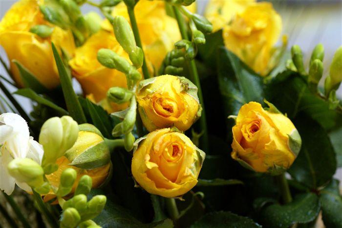 """""""https://i1.wp.com/www.fabiovisentin.com/photography/photo/12/yellow-roses-bouquet-00884_high.jpg"""" grafik dosyası hatalı olduğu için gösterilemiyor."""