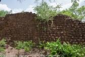 Désordres dans les murs par la végétation