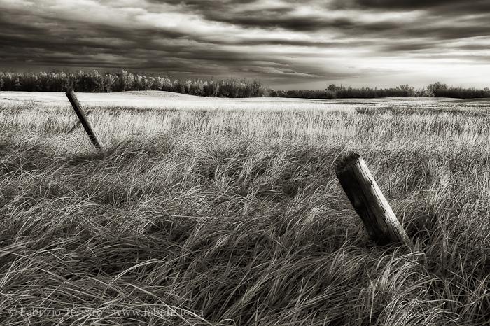 Sherwood Park,  Alberta, Canada, Alberta Prairie