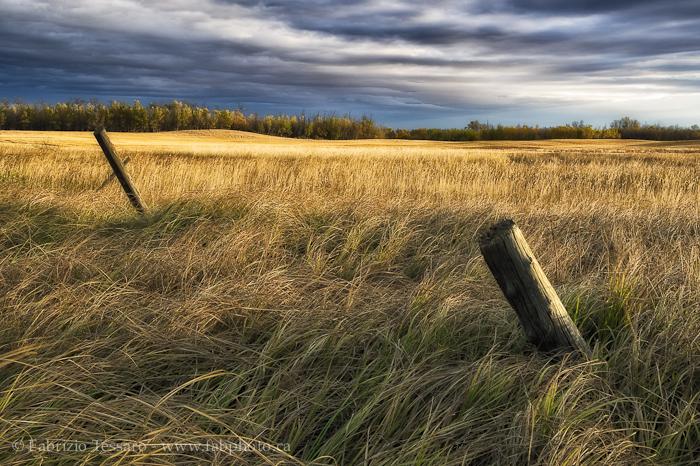Sherwood Park, Alberta Prairie, Canada