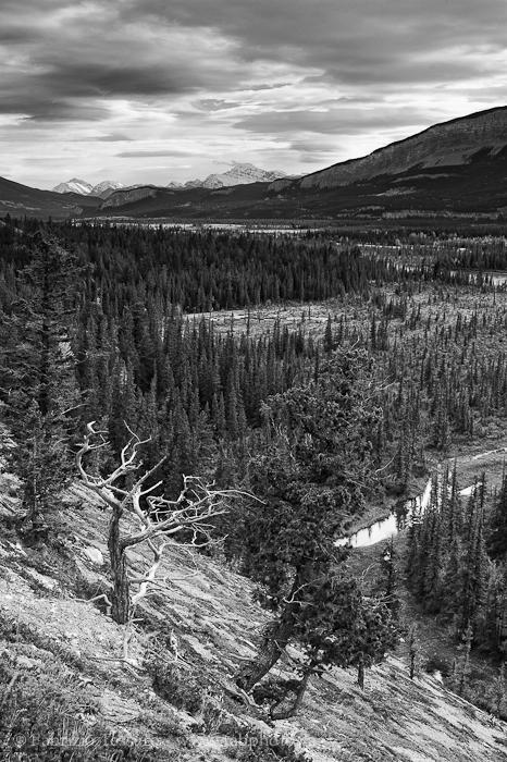overlander trail in November, Jasper National Park, Alberta, Canada