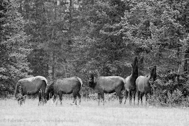 Jasper National Park, Alberta Canada