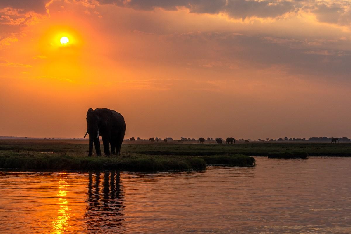Botswana: Chobe National Park,  elefanti al tramonto
