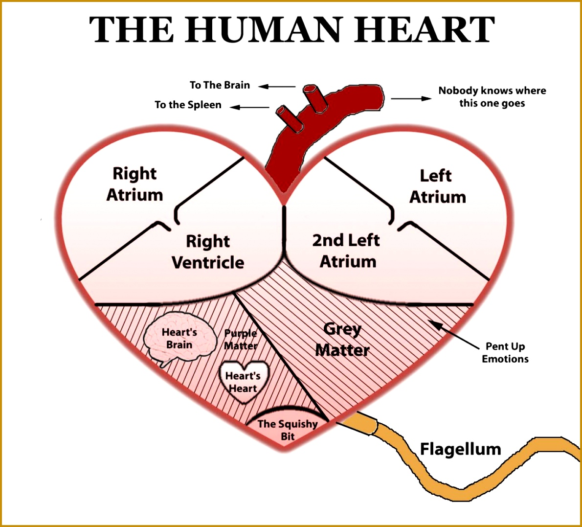 4 Printable Heart Diagram To Label