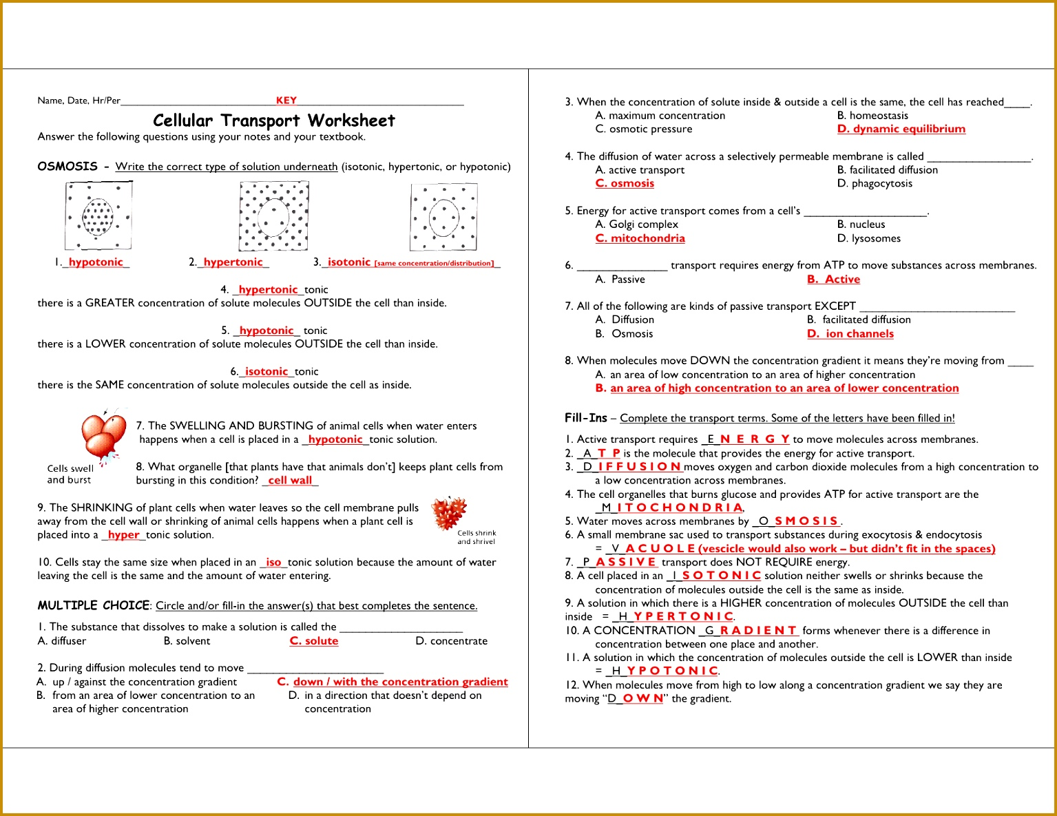 4 Cell Transport Review Worksheet