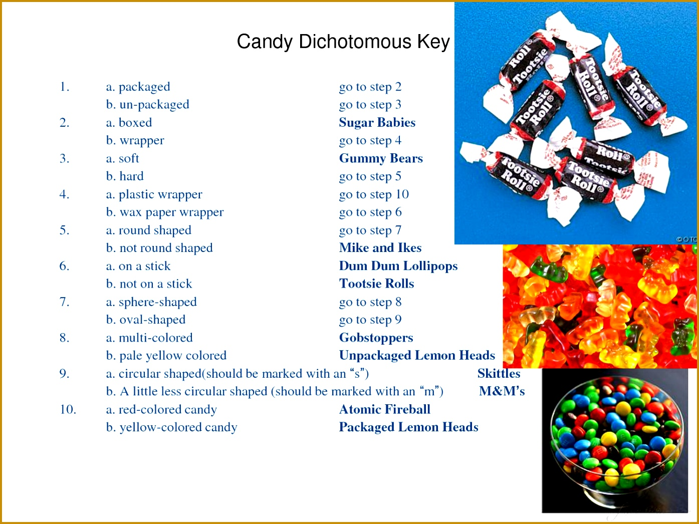 Dichotomous Key Worksheet For Animals