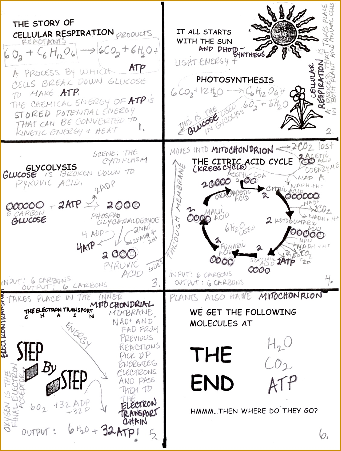 7 Photosynthesis And Cellular Respiration Worksheet