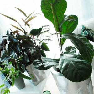 kamerplant kopen