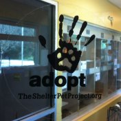 Fab-Finds-Featured-Story-flagler-humane-society-adopt