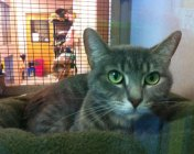 Fab-Finds-Featured-Story-flagler-humane-society-green-eyed-cat