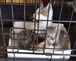 fab-finds-flagler-cats-more-texas-cats