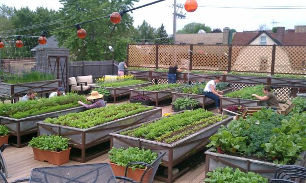 vegetable roof garden Cool Environment Friendly Ideas for your Rooftop