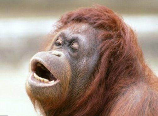 Women having sex with monkeys Nude Photos 34
