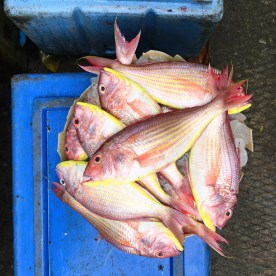 fish, pink fish, Fort Kochi, Cochin, Kochi, Kerala, South India, India, Faces Places and Plates blog