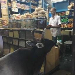 Indian market, Karaikudi, Tamil Nadu, South India, India, Faces Places and Plates blog
