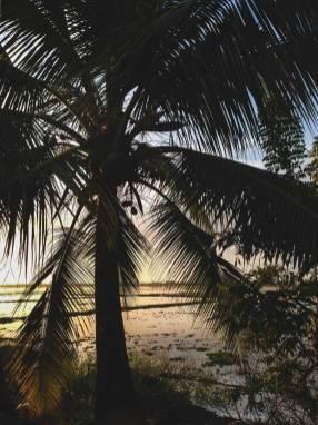 Dusk in the Kerala backwater, overlooking rice fields.