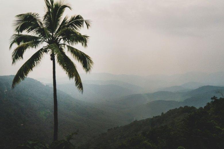 Periyar region, South India.