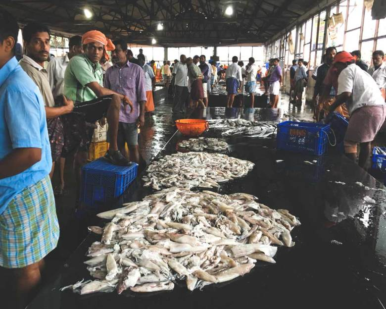 Kozhikode-Fish-Auction_Interior