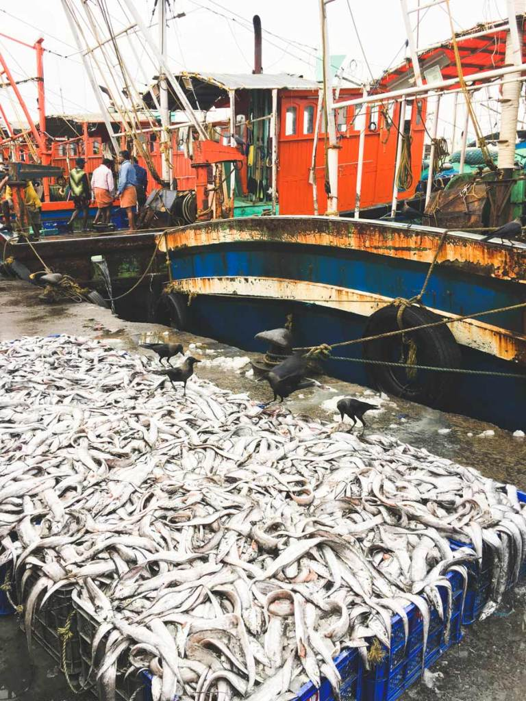 Kozhikode-Fish-Market-Catch