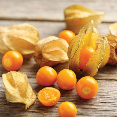 Image of Physalis pruinosa Cape Gooseberry 'Goldie'