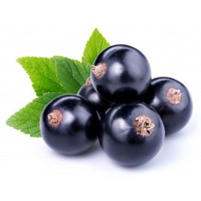 Image of Ribes nigrum - Black Currant