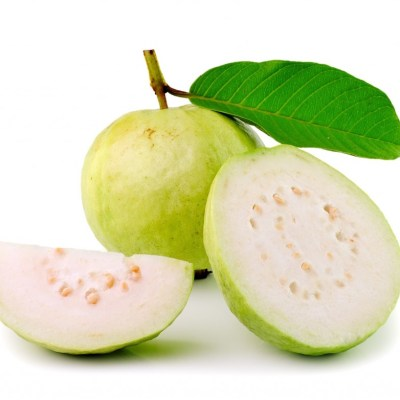 Image of Psidium guajava 'Indian Guava'