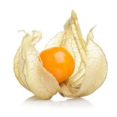 Image of Physalis peruviana 'Inca Berry'