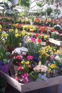 flowers_albany_ny_plants