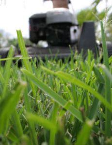 lawn programs1