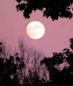 moonlight gardening tip