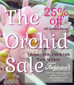 orchid sale