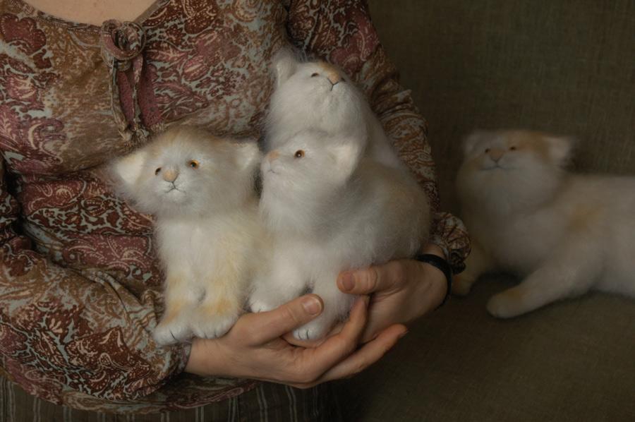 cat & kittens