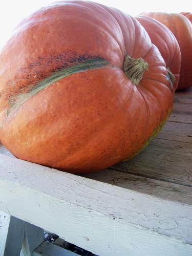 Giant Pumpkins on Rte 191 Farm Stand near Hamlin © Frank H. Jump