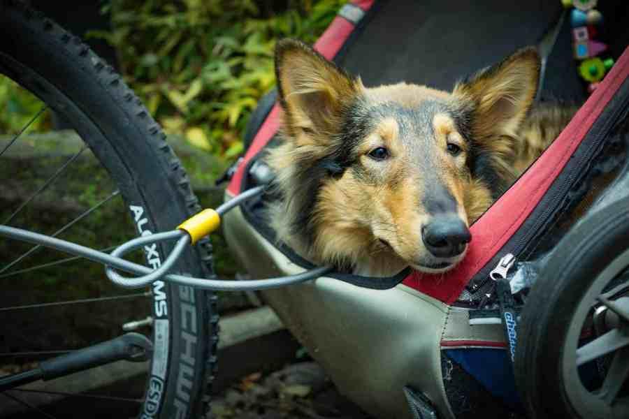 Hund im Hundeanhänger