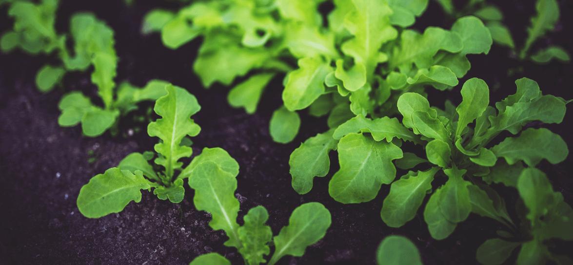 20 Ways to DESTROY Weeds in Your Garden   Fainting Fox Farm