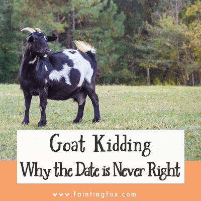 Goat Kidding – 1 Surprising Secret why You Never get the Date Right