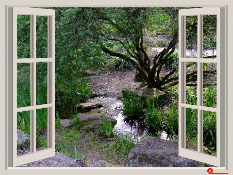window, garden, window frames