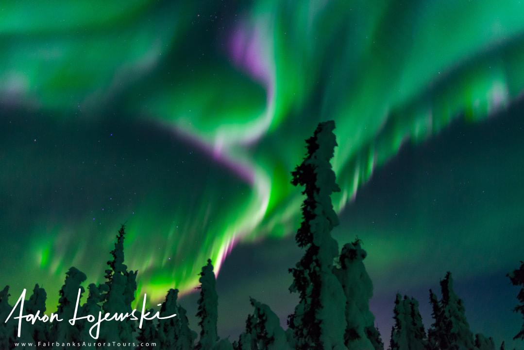 Northern Light Tours Alaska