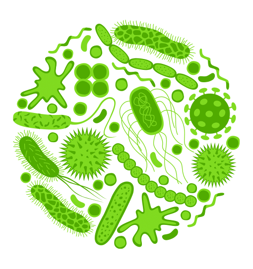 FH PRObiotic - Six Strains of Friendly Bacteria