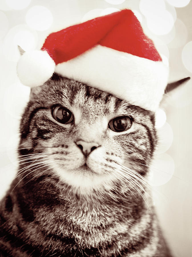 Fairmount Pet Shoppe Blog Archive 10 Holiday Gift Ideas