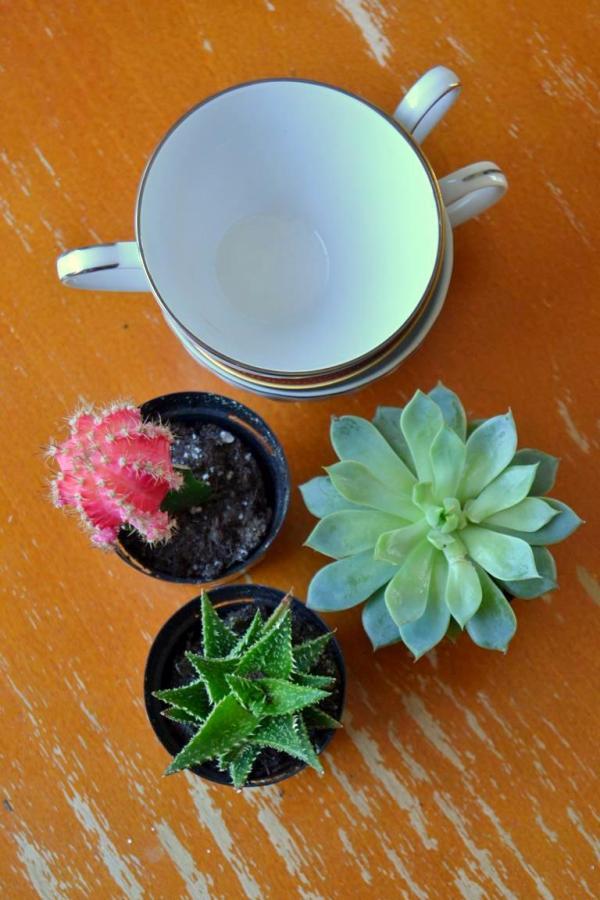 Tattooed Martha - Teacup Succulent Planters (1)