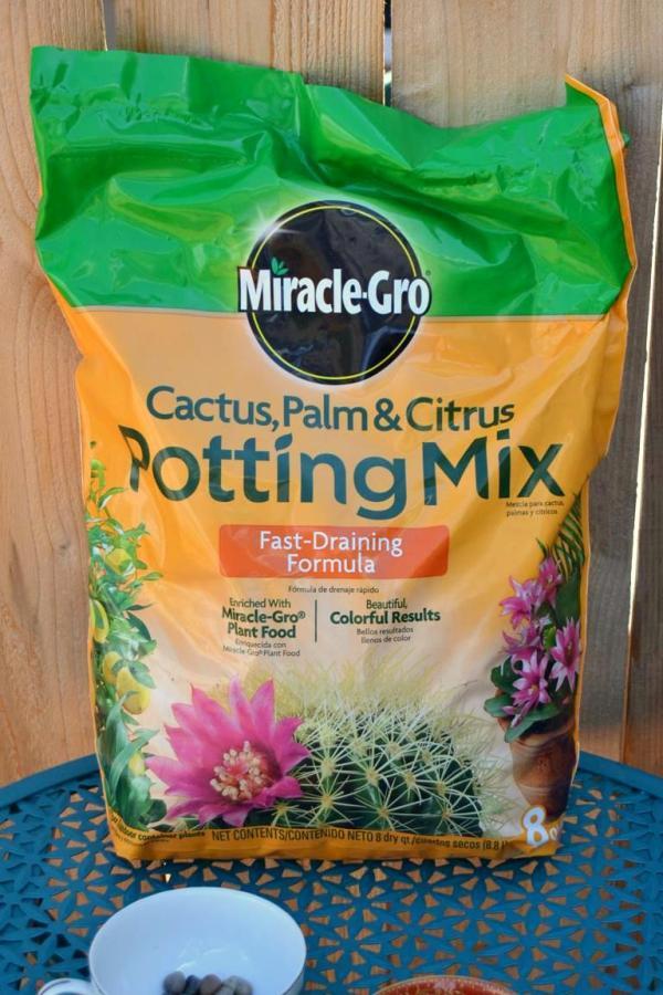 Tattooed Martha - Teacup Succulent Planters (2)