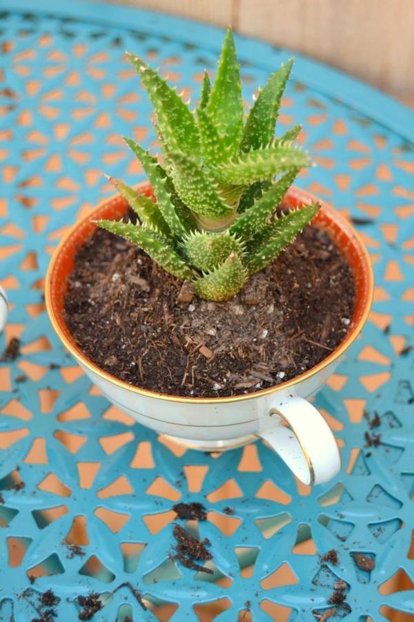 Tattooed Martha - Teacup Succulent Planters (4)