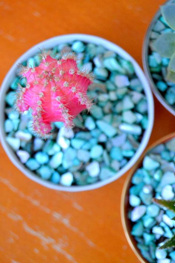Tattooed Martha - Teacup Succulent Planters (7)