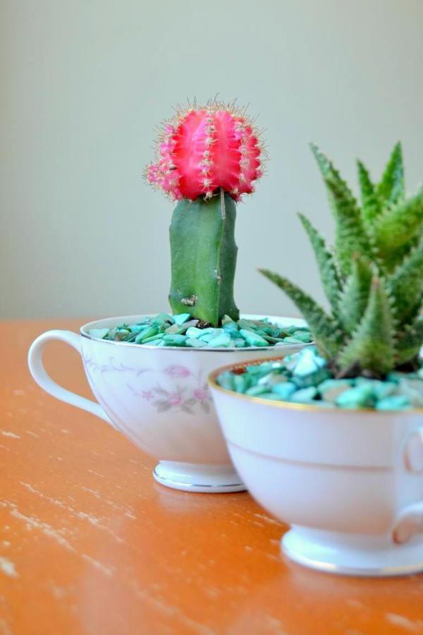 Tattooed Martha - Teacup Succulent Planters (9)