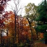 autumnky1